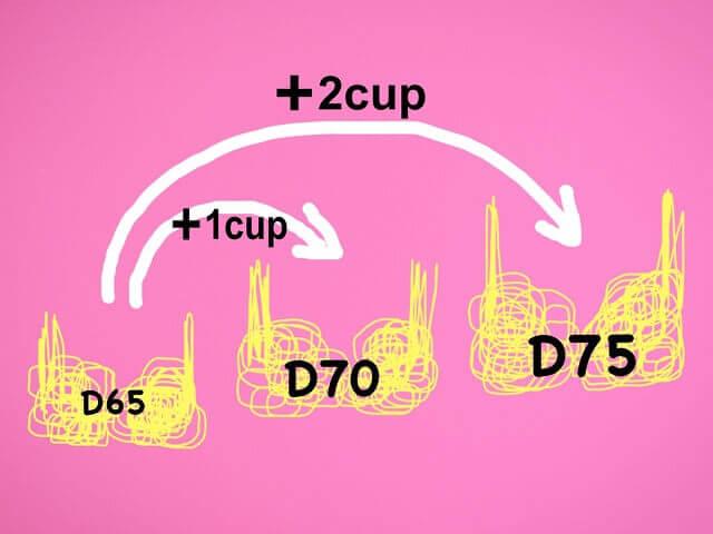 Dカップサイズ