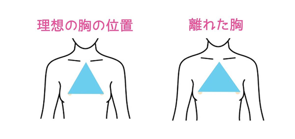 理想の胸の形比較